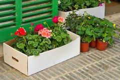 Plantas en una caja Imagen de archivo libre de regalías
