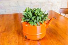 Plantas en una caldera del florero Fotografía de archivo libre de regalías