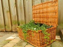 Plantas en una cesta Foto de archivo