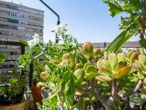 Plantas en una terraza imagen de archivo