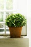 Plantas en ventana lateral de los potes Foto de archivo libre de regalías