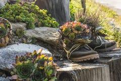 Plantas en zapatos Imagenes de archivo