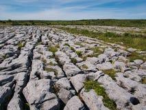 Plantas entre rochas com sulcos e fendas fotografia de stock