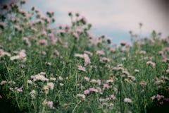 Plantas espinosas espontáneas en el florecimiento Foto de archivo