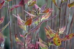 Plantas exóticas Fotografía de archivo