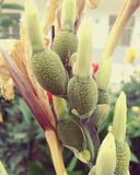 Plantas exóticas Fotografia de Stock