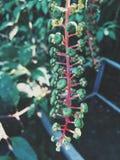 Plantas exóticas Imagem de Stock Royalty Free