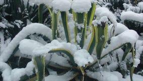 Plantas exóticas cubiertas con nieve metrajes