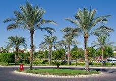 Plantas exóticas em Egito. Turismo. Fotos de Stock