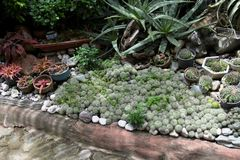 Plantas exóticas indicadas nos locais do Sr. Residência do ` s de Victoria do dela de Alexander em Matanao, Davao del Sur, Filipi foto de stock