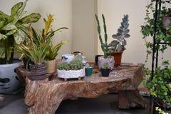Plantas exóticas indicadas nos locais do Sr. Residência do ` s de Victoria do dela de Alexander em Matanao, Davao del Sur, Filipi imagem de stock