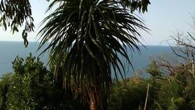 Plantas exóticas no jardim do Batanic de Batumi filme