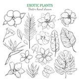 Plantas exóticas tiradas mão ajustadas ilustração do vetor