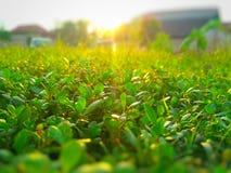 plantas expuestas al Sun Fotografía de archivo libre de regalías