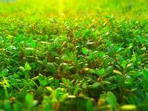 plantas expuestas al Sun Foto de archivo