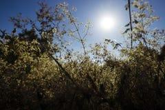 Plantas exteriores selvagens Fotos de Stock Royalty Free