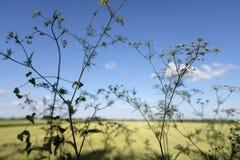 Plantas exteriores selvagens Imagens de Stock