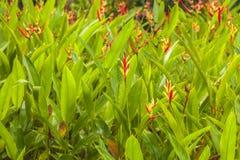 Plantas florecientes Imágenes de archivo libres de regalías