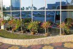 Plantas florecientes en potes en verano en la calle delante de la fachada del edificio en la ciudad DES el ajardinar y del paisaj foto de archivo