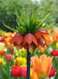 Plantas florescidas no jardim Foto de Stock Royalty Free