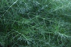 Plantas frescas selvagens Fotografia de Stock