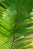 Plantas frescas verdes Fotos de Stock