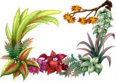 Plantas frondosas y una rama de un árbol Imágenes de archivo libres de regalías