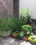 Plantas fuera del hogar moderno en la acera del guijarro Foto de archivo libre de regalías