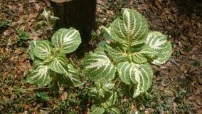 Plantas gêmeas Fotografia de Stock