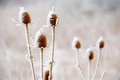 Plantas geladas Fotografia de Stock
