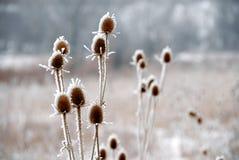 Plantas geladas Fotografia de Stock Royalty Free