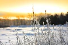 Plantas geladas Foto de Stock