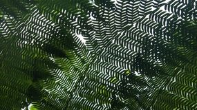 Plantas grossas, luxúrias, verdes Fotos de Stock Royalty Free