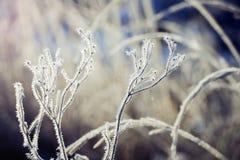 Plantas heladas foto de archivo libre de regalías