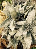 Plantas heladas la Navidad Fotografía de archivo