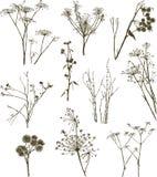 Plantas herbarias salvajes Imágenes de archivo libres de regalías