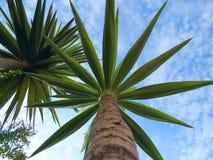 Plantas hermosas del cactus, Israel Fotografía de archivo