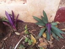 Plantas hermosas en el gardern Fotos de archivo libres de regalías
