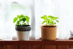 Plantas home Foto de Stock Royalty Free