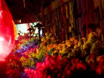 Plantas iluminadas por luzes de Natal Fotografia de Stock Royalty Free