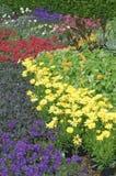 Plantas inglesas de la cama de flor del jardín Fotografía de archivo libre de regalías