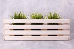 Plantas interiores en una caja de madera imagen de archivo