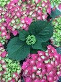 Plantas internas Imagem de Stock