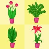 Plantas internas Fotografia de Stock
