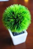 Plantas internas Imagem de Stock Royalty Free
