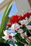 Plantas internas Imagens de Stock