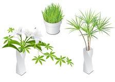 Plantas isométricas no vaso e no potenciômetro modernos Fotografia de Stock