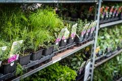 Plantas listas para sembrar Imagenes de archivo