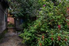 Plantas lujuriantes en hutong chino envejecido después de la lluvia del verano fotografía de archivo