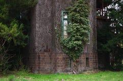 Plantas luxúrias na construção de madeira velha Foto de Stock